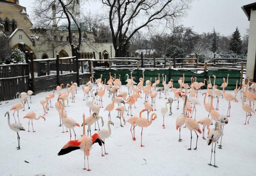 Budimpešta i Zoo (2)